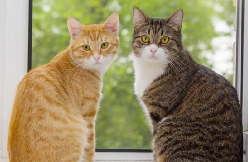 Jenis-Jenis Kucing Lengkap